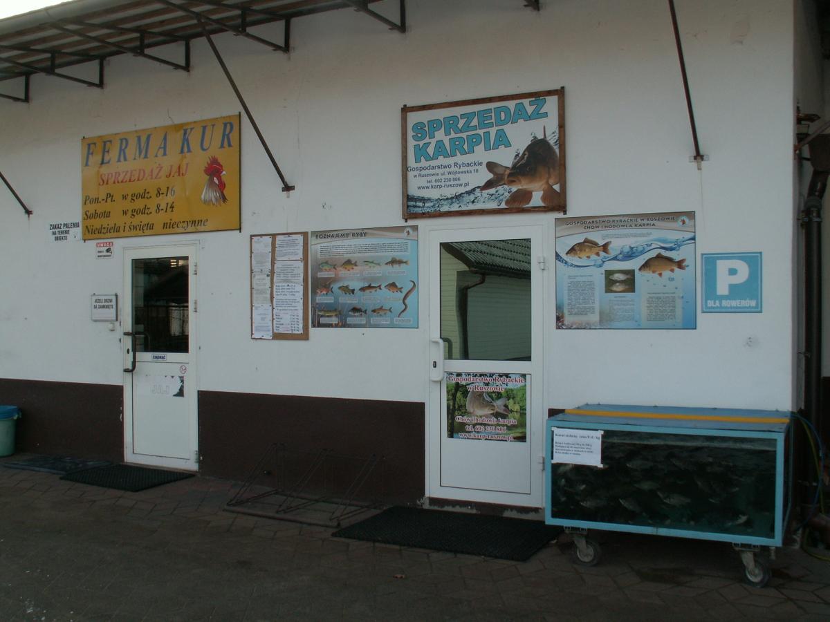 Sprzedaż: karpia handlówki, tołpygi, karasia