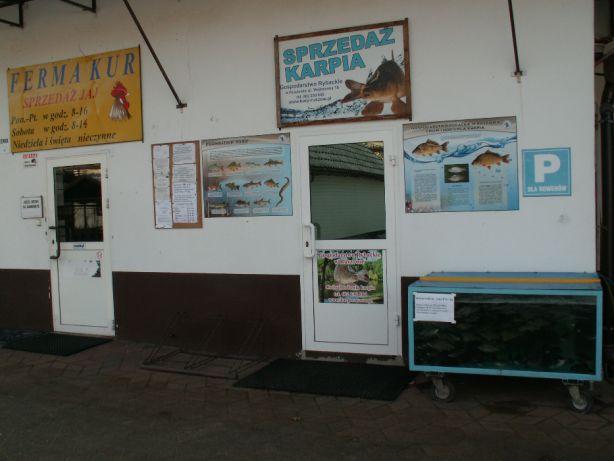 Amury, karpie oraz karasie kolorowe w sprzedaży
