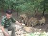 Dziki stałymi bywalcami na stawach 14