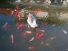 Kolorowe ryby 4