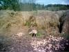 stawy-karp-zwierzeta-wokolo-stawow9