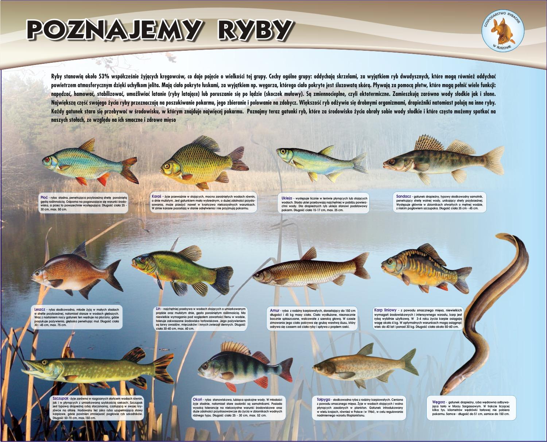 Sprzedaż ryb