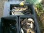 Jesienne odłowy i sprzedaż ryb 2020