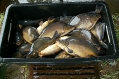 jesienne-odlowy-i-sprzedaz-ryb-karp