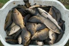 jesienne-odlowy-i-sprzedaz-ryb