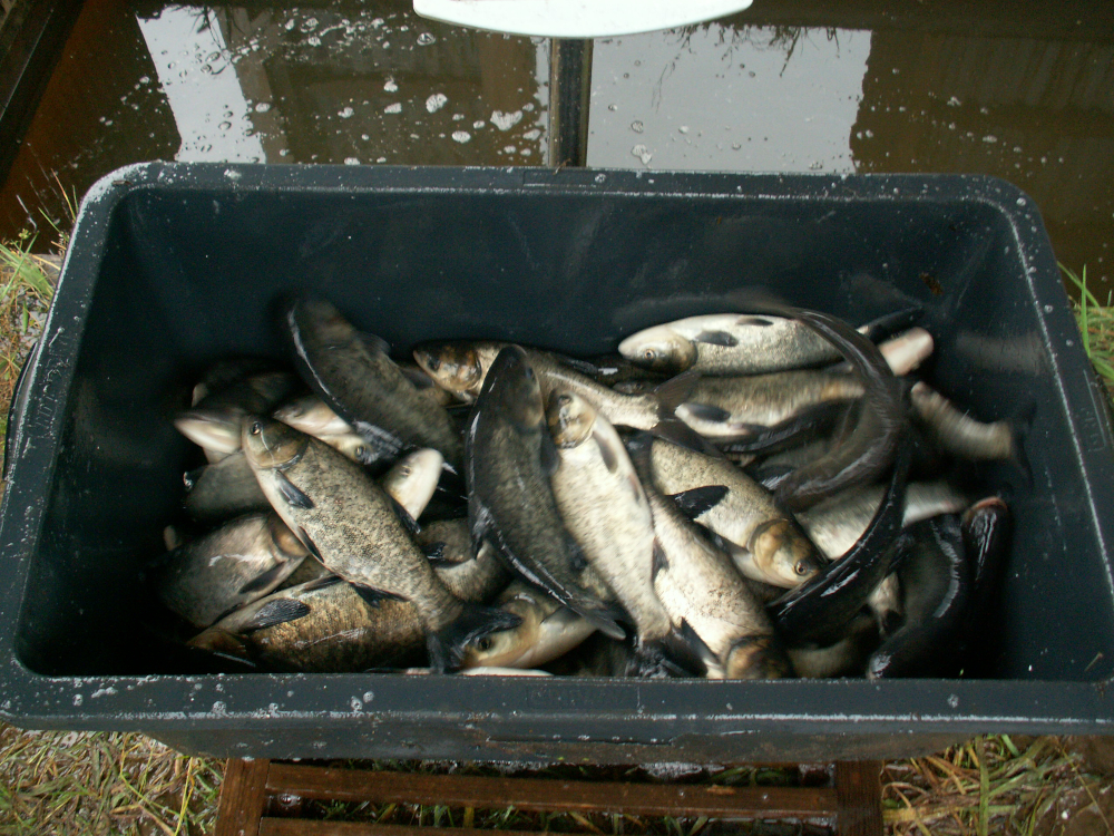 odłowy ryb