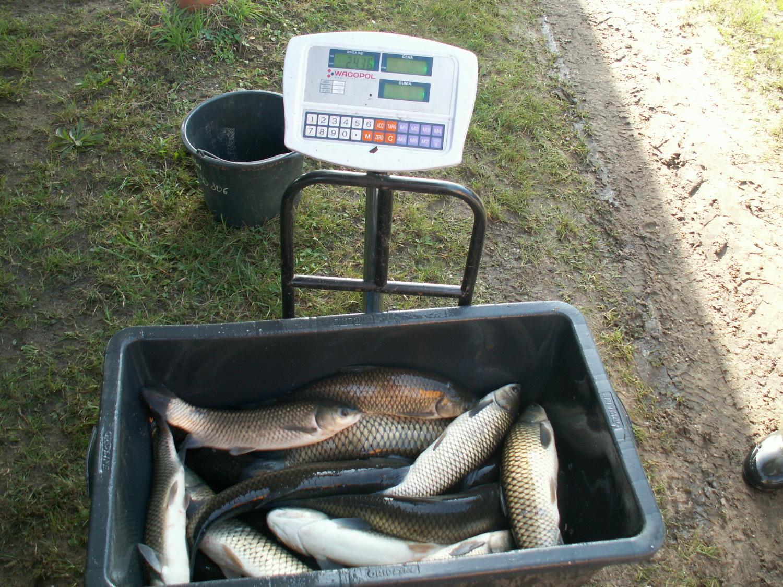 Ryby do konsumpcji już w sprzedaży listopad 2019