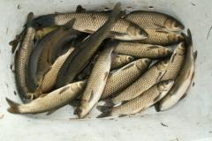 odlowy-zarybienie-sprzedaz-ryb